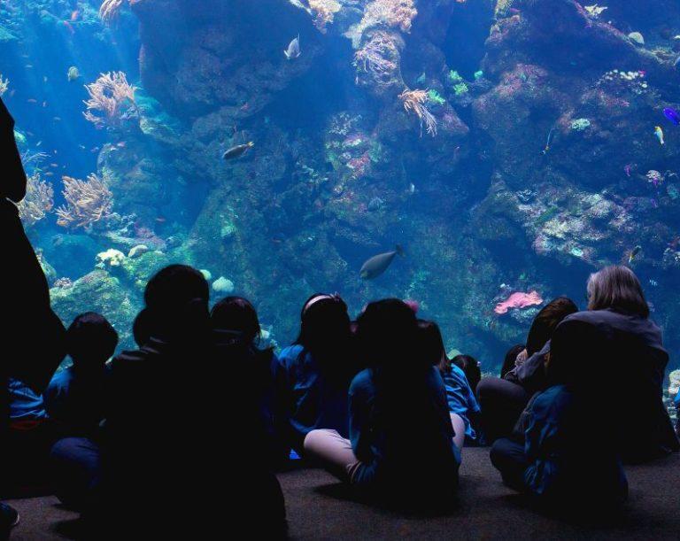 Ist ein Aquarium sinnvoll?